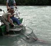 Copper River Salmon Fishing by Jet Boat