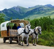 Denali Covered Wagon Adventure