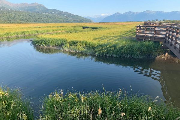 Potter Marsh Bird Sanctuary in Anchorage, Alaska